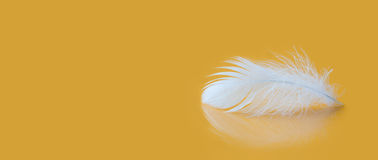 Feather fluffy white texture macro view. Luxury softness concept. Bird plumage feathering on yellow background. Shallow Stock Image