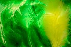 Feather Frame Stock Photos
