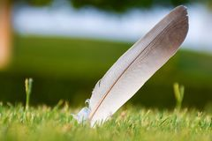 Feather on a freshly cut green grass stock photo