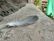 Feather friends. Piegon feather on rainy day Stock Photos