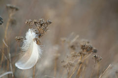 Feather and grass. Stock Images