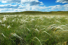 Free Feather-grass Royalty Free Stock Images - 4842359