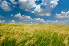 Free Feather-grass Royalty Free Stock Photos - 5885588