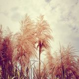 Feather grass background. Feather grass vintage style background Stock Photography