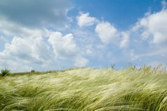 Feather-grass and blue sky Stock Photo