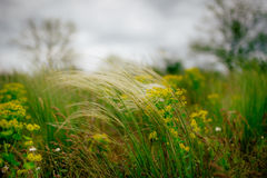 Feather grass in the field Stock Image