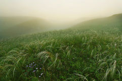 Feather grass in foggy morning at the hills Royalty Free Stock Images