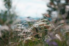 Feather grass in a forest glade stock photos