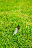 Feather on grass Royalty Free Stock Image