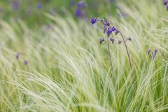 Feather Grass stock photography