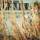 Feather grass on the riverbank - retro effect. stock image