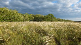 Feather grass in steppe. stock image