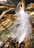 Feather in the grass - vertical Royalty Free Stock Photos