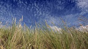 Feather grass on wind and sky