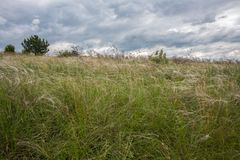 Feather grass in windy steppe. Stock Image