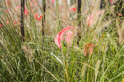 Feather in the green grass in the fog Royalty Free Stock Photography