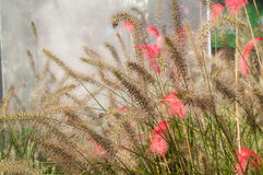 Feather in the green grass in the fog Royalty Free Stock Photo