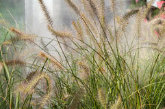 Feather in the green grass in the fog Stock Image