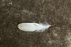 Feather on  ground Stock Photo