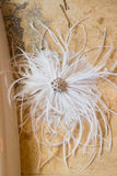 Feather Hair Pieces Royalty Free Stock Photography