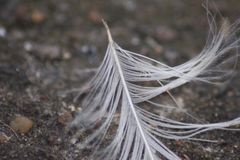 Feather Has Landed Royalty Free Stock Images