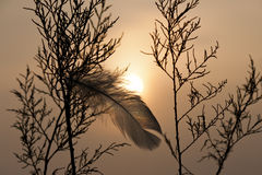 Feather. Hook up on bush in foggy sunset Stock Image
