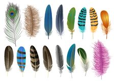 Feather icon set, realistic style. Feather icon set. Realistic set of feather vector icons for web design isolated on white background vector illustration