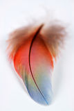 Feather II Royalty Free Stock Photography