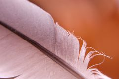 Feather III. Feather close-up Royalty Free Stock Photography