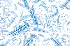 The feather illustrations background abstract, hand drawn. Details, line, canvas & nature. The feather illustrations background abstract, hand drawn. Cartoon Royalty Free Stock Images