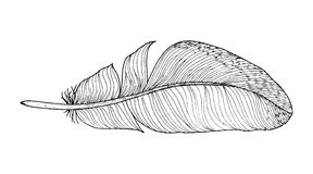 Feather ink sketch. Isolated on white background. Vector illustration for your design Royalty Free Stock Images