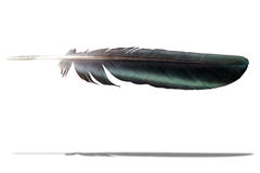 Feather. Isolated on white background Stock Photography