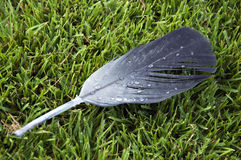 Feather on the lawn Stock Photos