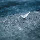 A feather laying on the ground royalty free stock images