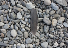 Feather laying on stones Stock Photo