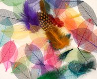 Feather light leaves. Autumn mix, selected of random multi coloured Feathers and leaves stock image