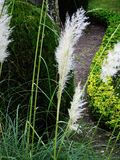 Feather-like Plant among the Greenery Royalty Free Stock Photo
