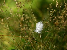 Feather. Little bird feather in grass Stock Photo