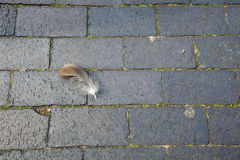 Feather lying on the ground Stock Photography