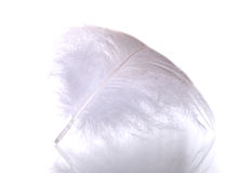 Feather macro. Feather isolated on white background Stock Photos