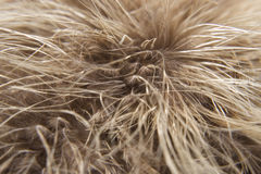 Feather macro Royalty Free Stock Images