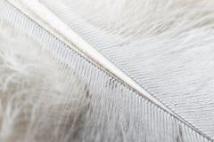 Feather macro background plumage. Lightweight stock image