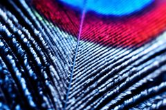 Feather macro. Colorful peacock feather macro image royalty free stock photography