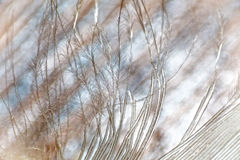 Feather macro Stock Images