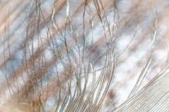 Feather macro. Feather extreme macro background stock images