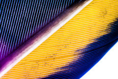 Feather. Macro photography of a feather Royalty Free Stock Photography