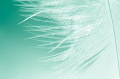 Feather macro selective focus Royalty Free Stock Images