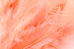 Feather macro texture. Closeup of the feather macro texture royalty free stock photos
