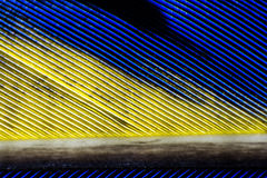 Feather. Macro view of a blue and yellow feather Stock Photography