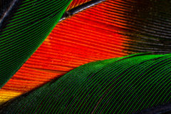Feather. Macro view of a green and red feather Stock Photography